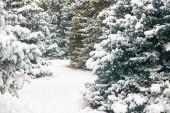 Krásná zimní krajina se zasněženými stromy