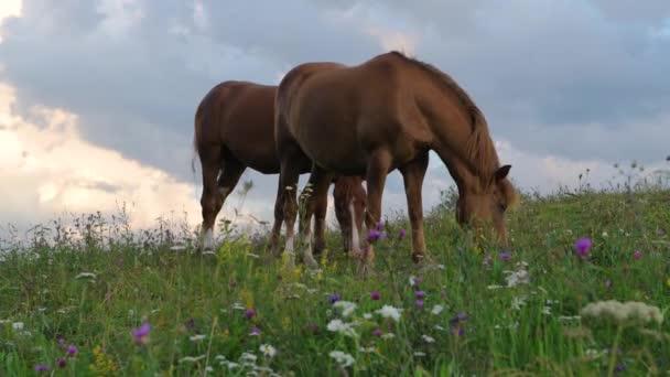 ein Pferd auf einer grünen Hügelweide, Karpaten, wilde Blumen vor blauem Himmel mit Wolken bei Sonnenuntergang.