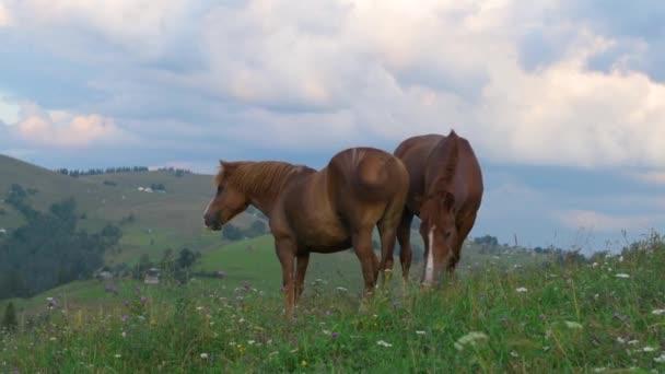 Kůň na zelené pastvině, karpatské hory, divoké květiny proti modré obloze s mraky při západu slunce.