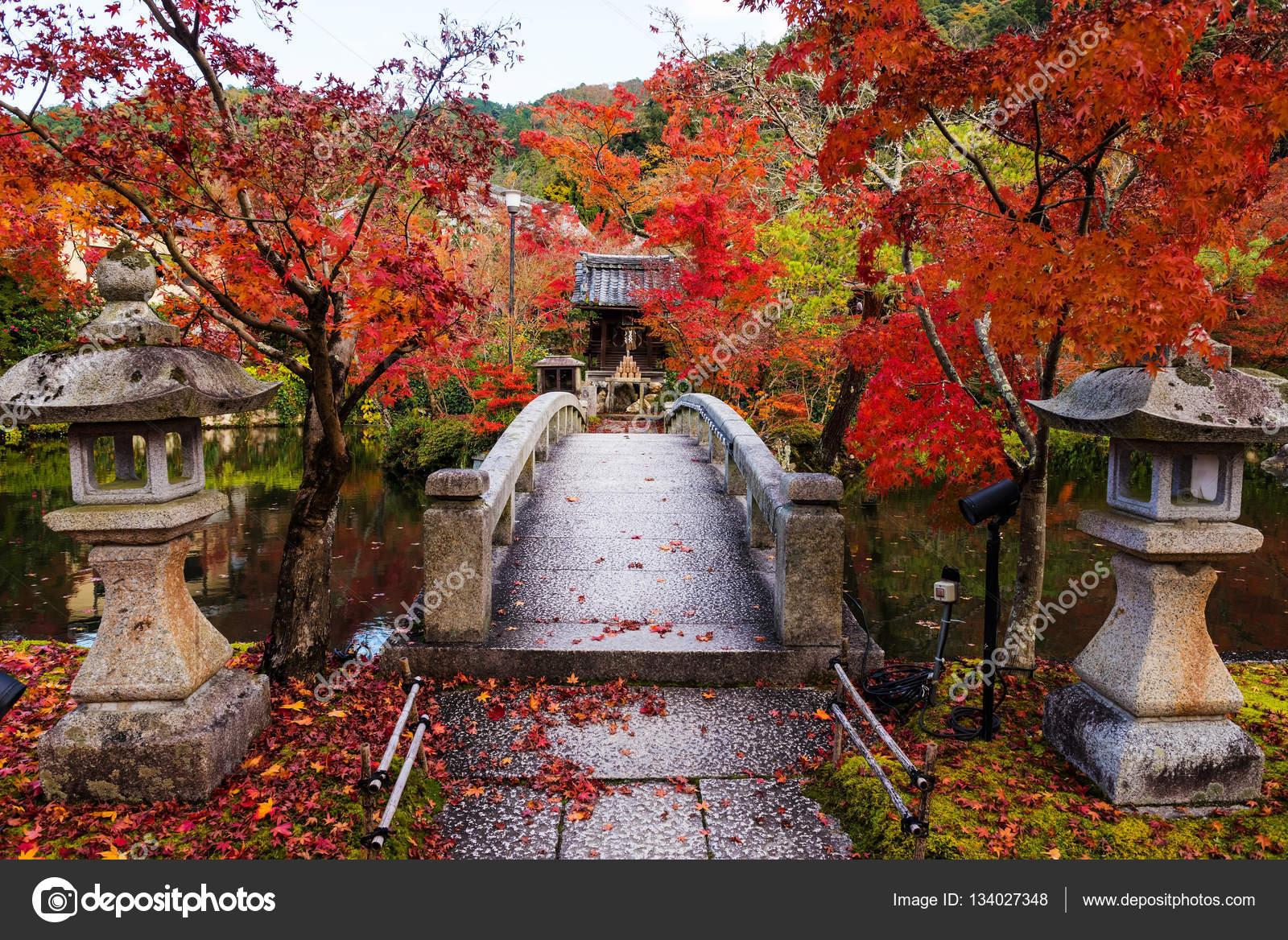 京都紅葉の永観 — ストック写真 ...