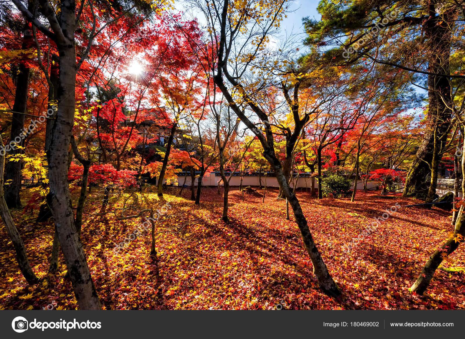 Fall leaf colors at Eikando temple, Kyoto – Stock Editorial Photo ...