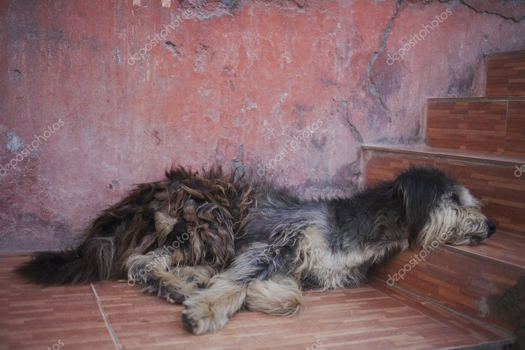 Sleeping dog infront of pink wall