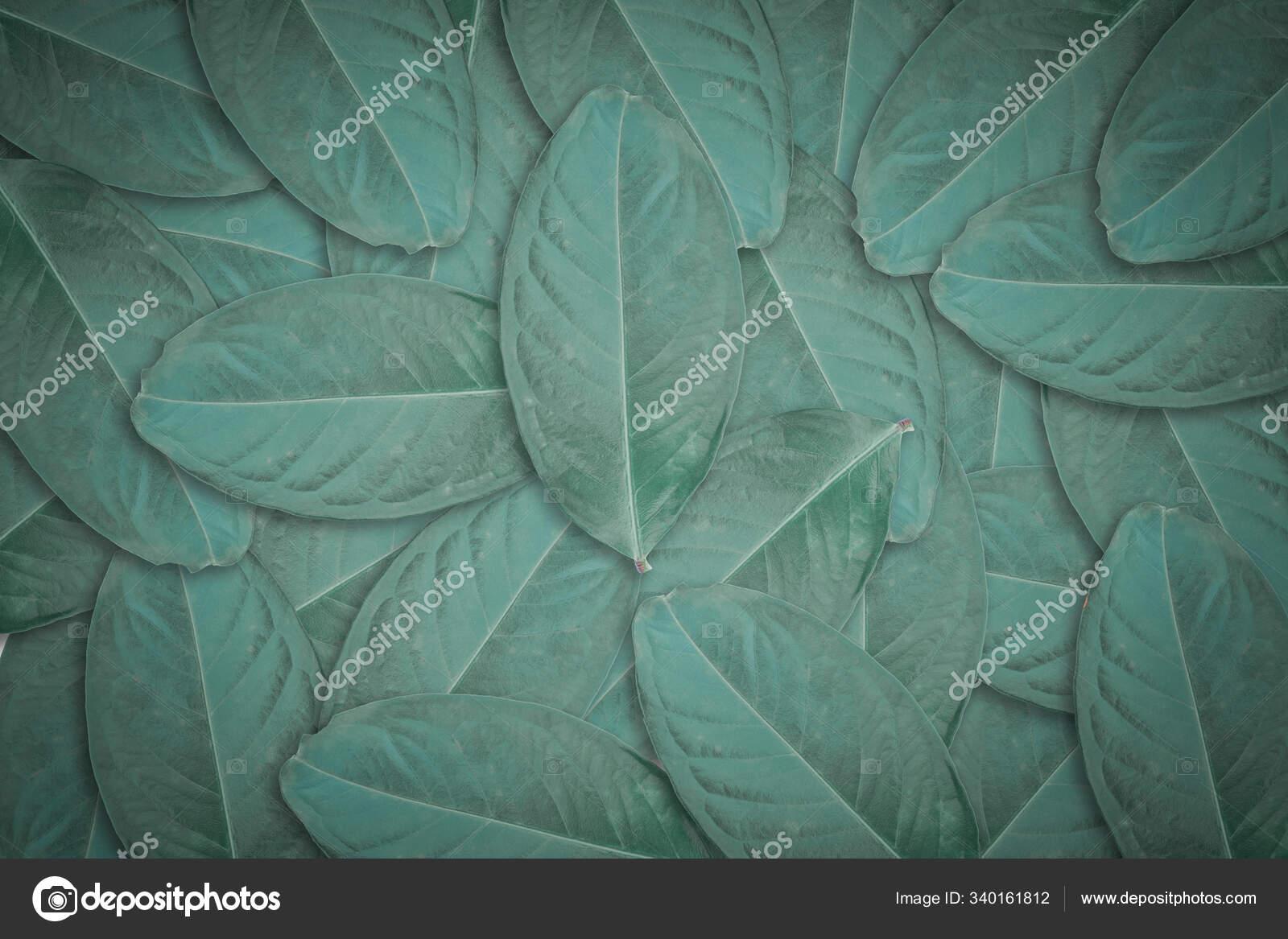 Dark Green Leaves Texture Background Natural Leaf Plant Backdrop