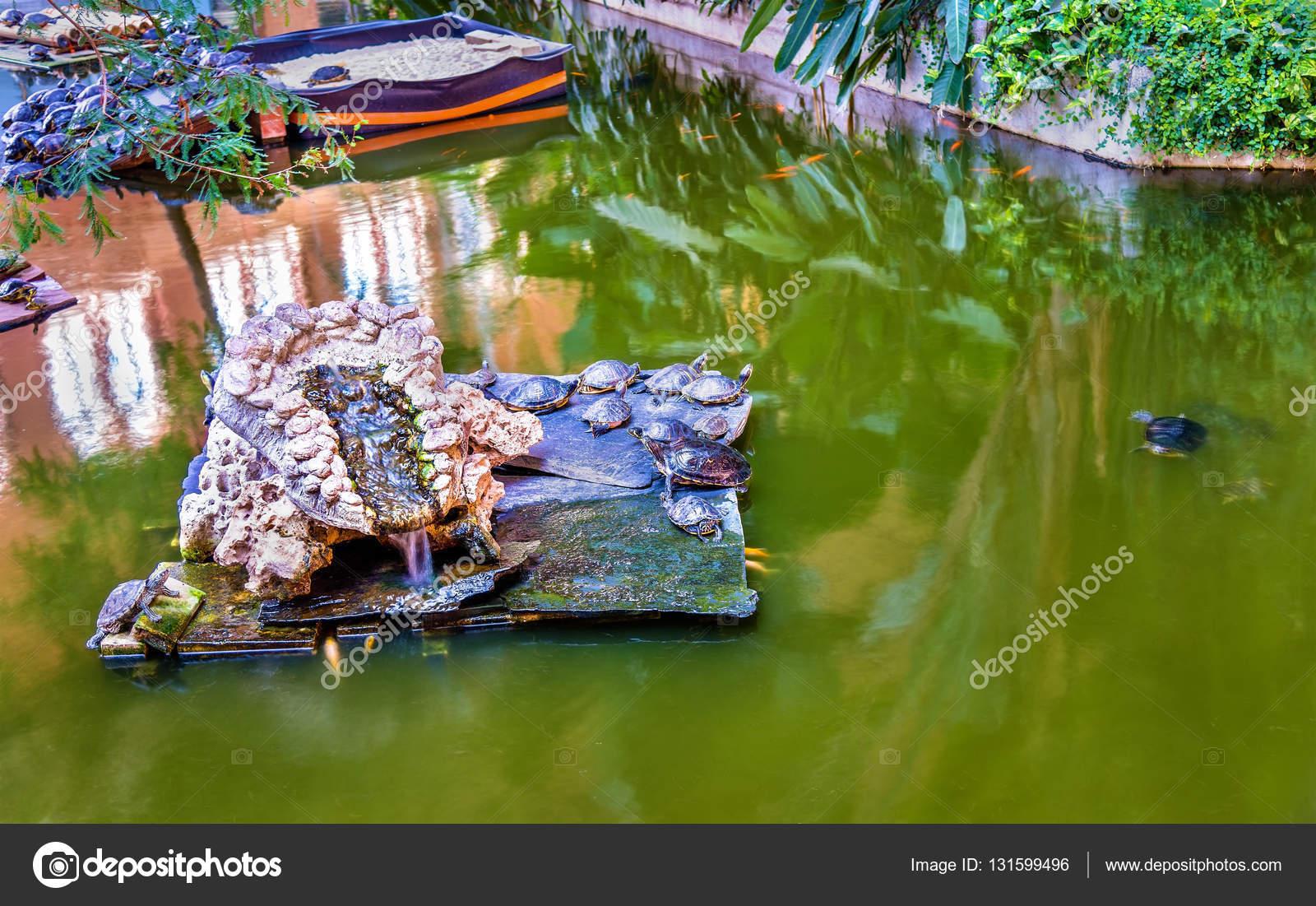Tortugas de agua verde en un estanque artificial en la estacin de