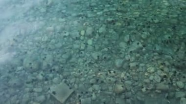 Beautiful shallow sea with urchin on a bottom and small fishes around