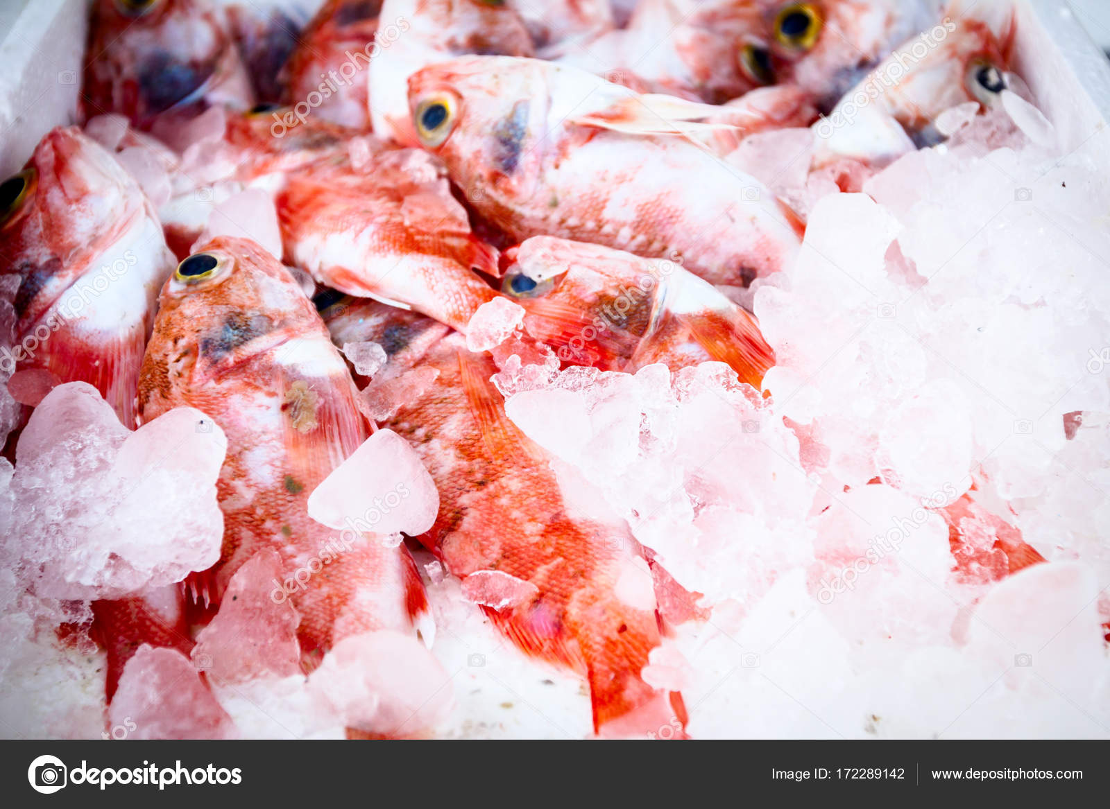 Fresh seafood in box with ice at the fish market — Stock Photo