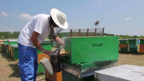 Včelaře, včelaře je kontrola včely na honeycomb dřevěné framebeekeeper bere z plástve na dřevěném rámu kontrolu stavu včelstva.