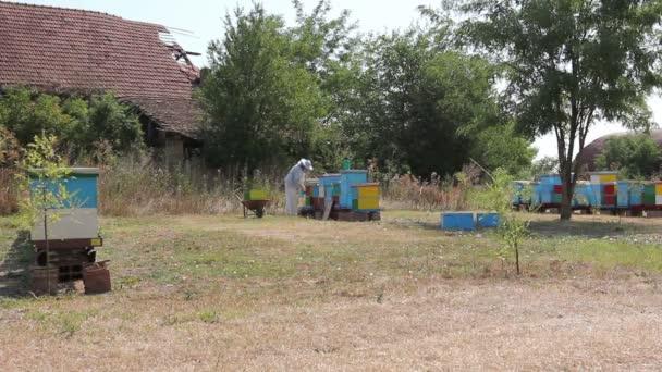 Včelaře, včelaře je sklizeň medu, vintagebeekeeper bere z plástve na dřevěném rámu extrahovat med ze včelích úlů, sklizeň