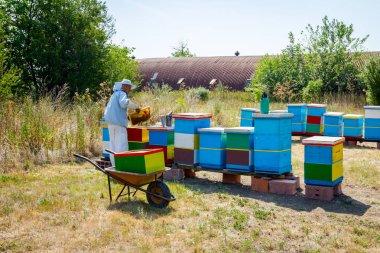 Apiarist, beekeeper is harvesting honey, vintage
