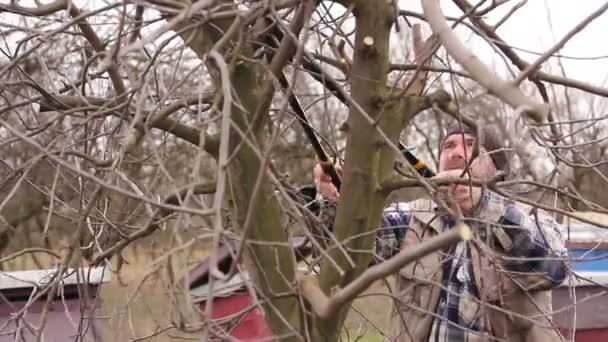 Zahradník je řezání větví, prořezávání ovocných stromů s dlouhou nůžky v sadu. Farmář je prořezávání větví ovocných stromů v sadu pomocí dlouhé nůžky na počátku jarní