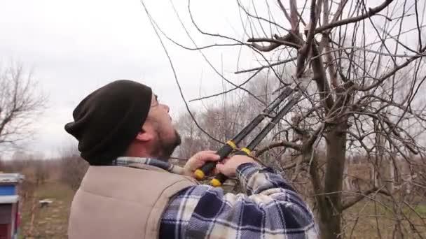 Zahradník je řezání větví, prořezávání ovocných stromů s dlouhou nůžky v sadu. Farmář je prořezávání větví ovocných stromů v sadu pomocí dlouhé nůžky na počátku jarní.