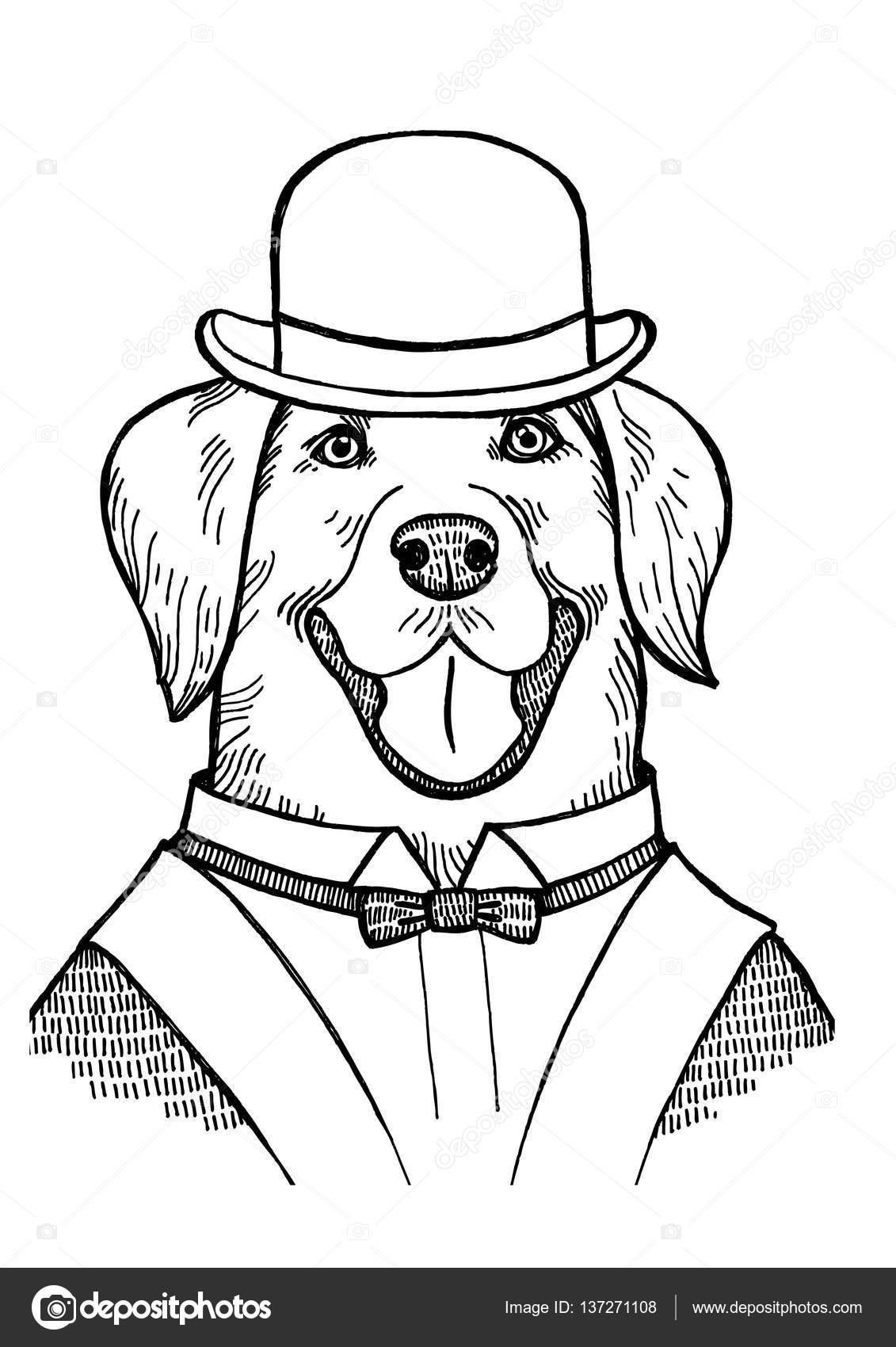 portret een labrador retriever met een bolhoed