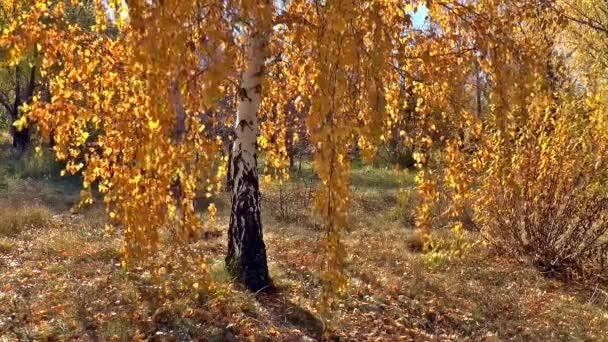 podzimní příroda bříza zlatý