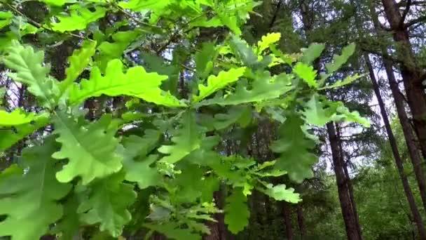 oak branch bush nature summer