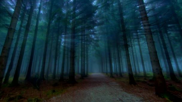 paprsky světla lesní sluneční paprsky