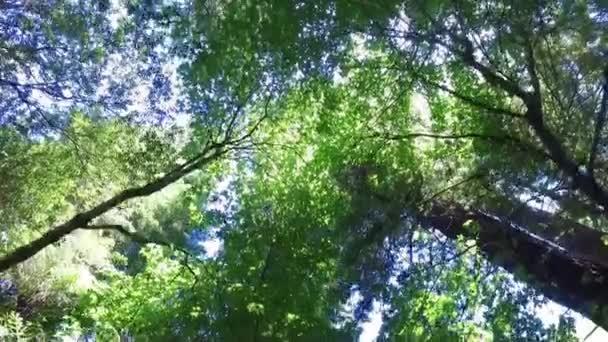 lesy, lesní strom krajina příroda