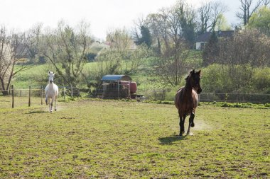 Dark Brown and White Horses Galloping in a Green Field on a Brig