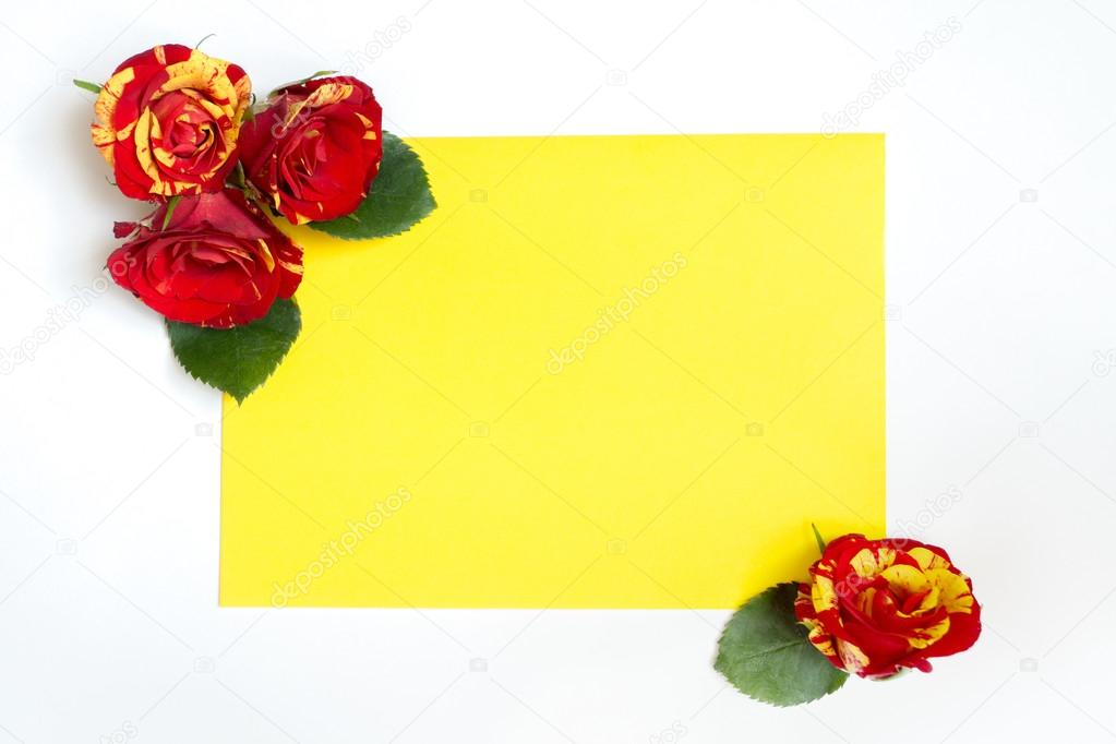 Yellow and red roses arranged in the corners of the sheet of pap