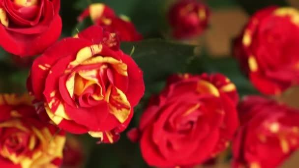 Kytice z krásné červené růže žlutá detail