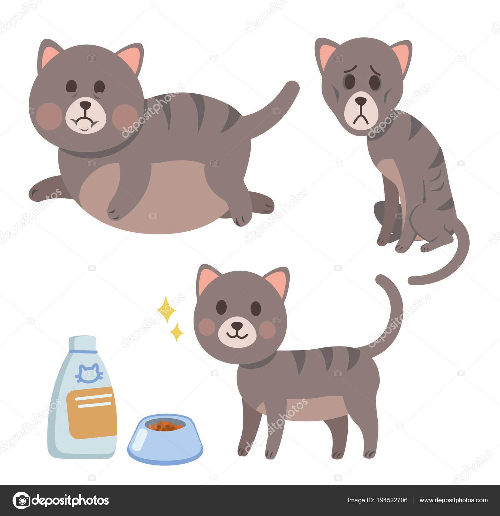 Animado Gato Flaco Problemas Con Peso Del Conjunto Los