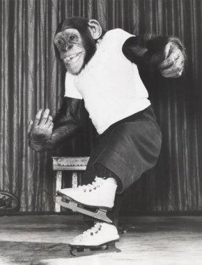 monkey ice skating on floor