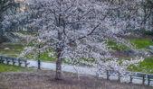 Central park, new york city primavera
