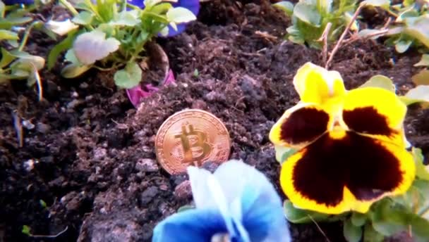 Grow bitcoin flowers miming ico future