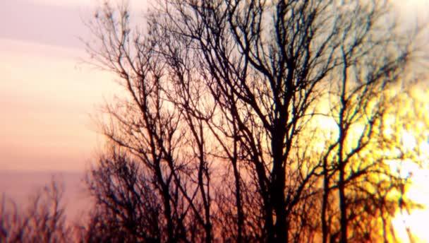 Příroda prostředí stromy západ slunce východ slunce