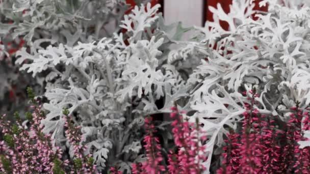 fiori congelati e piante .winter fiaba. foglia di cristallo di gelo freddo