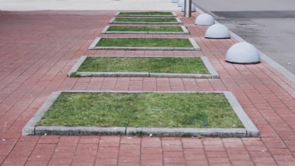 urban garden beds. growing cultivation flowers in city. nature backyard