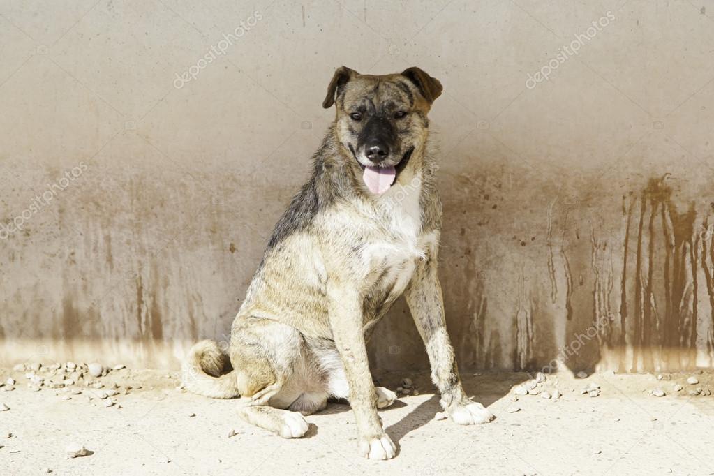 Seduta la cuccia del cane foto stock celiafoto 124892610 for Cuccia cane ikea prezzo