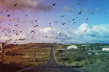 """Картина, постер, плакат, фотообои """"мигрирующие птицы """", артикул 134368692"""