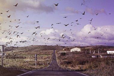 """Картина, постер, плакат, фотообои """"мигрирующие птицы """", артикул 134368772"""