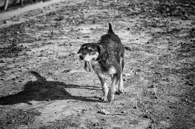 """Картина, постер, плакат, фотообои """"грустная собака лежит на садовых животных модульные"""", артикул 358639522"""