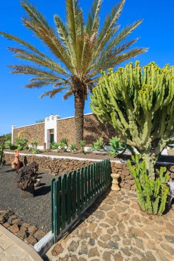 Canary style buildings and tropical plants in La Oliva village Heritage Art Center, Fuerteventura, Canary Islands, Spain