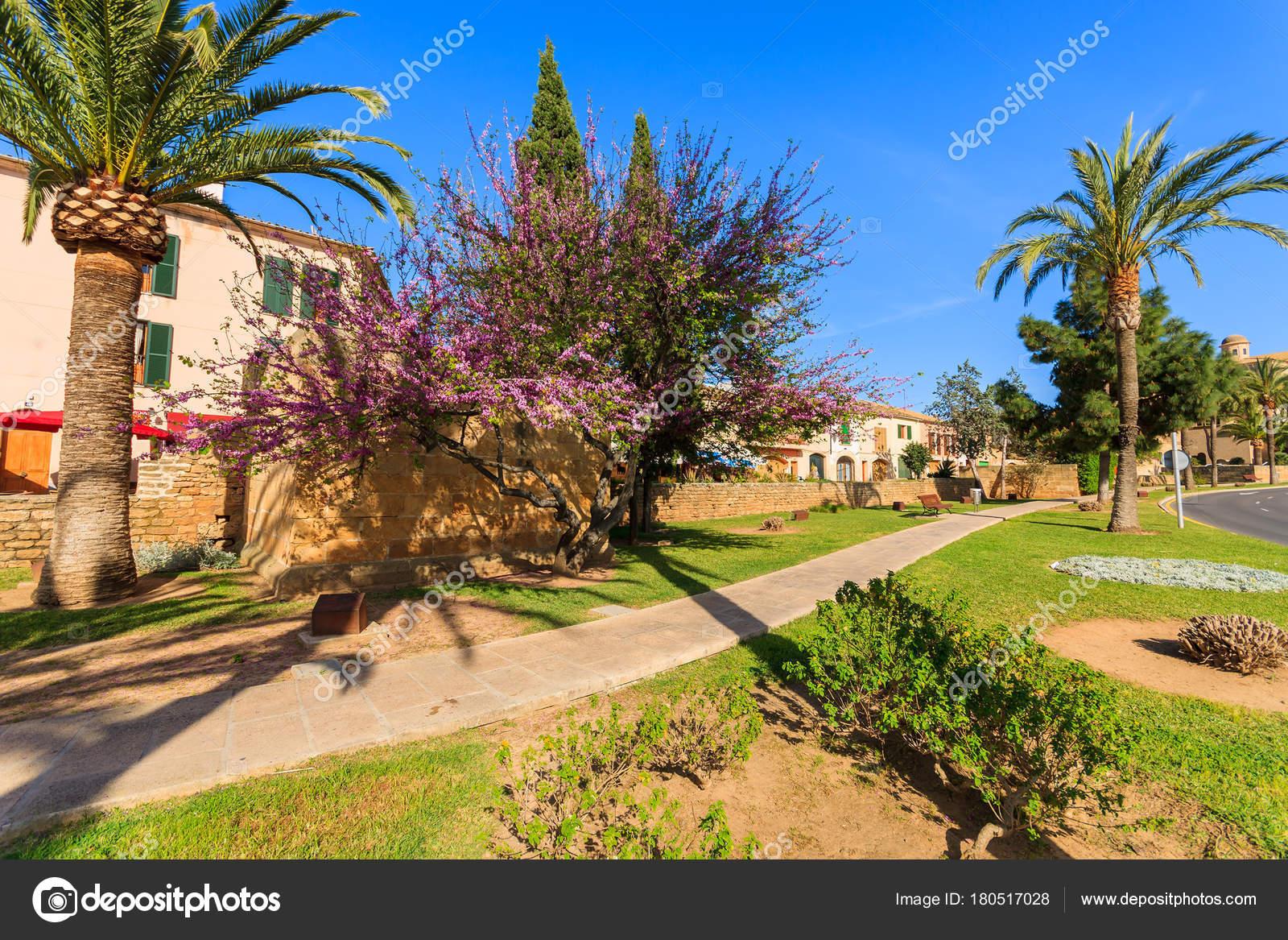 Allée Dans Parc Printemps Saison Arbres Palm Tree Jardin Fleuri ...