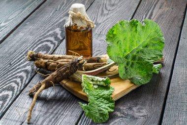 Roots and leaves of burdock (Arctium lappa), burdock oil in bott