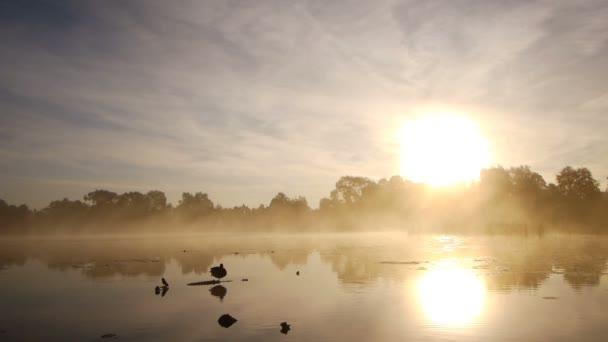 Osamělý kachna na jezeře