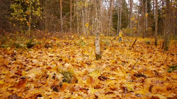 Séta az őszi erdőben