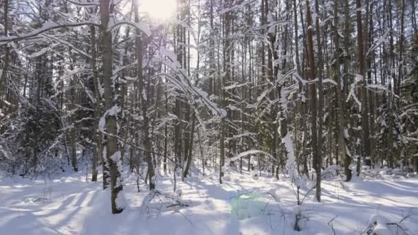 Panoramatický záběr zimní les a zasněžené stromy