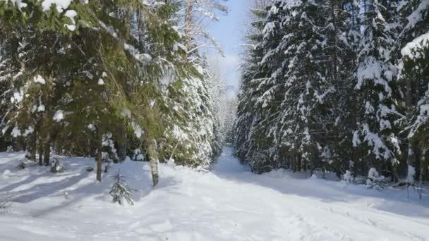 Panoramatický záběr zimní les a zasněžené stromy na slunečné počasí