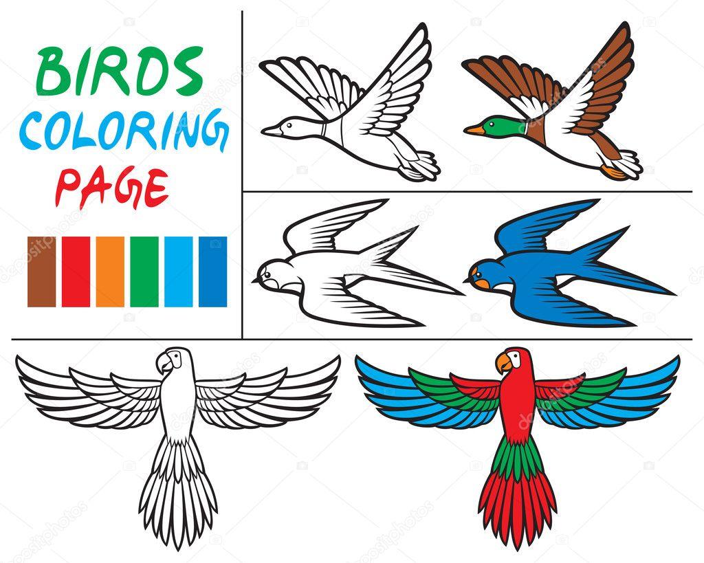 libro para colorear con conjunto de aves — Archivo Imágenes ...
