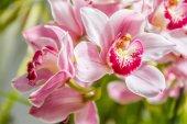 krásné květy orchidejí