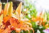 a természetes liliom virágok