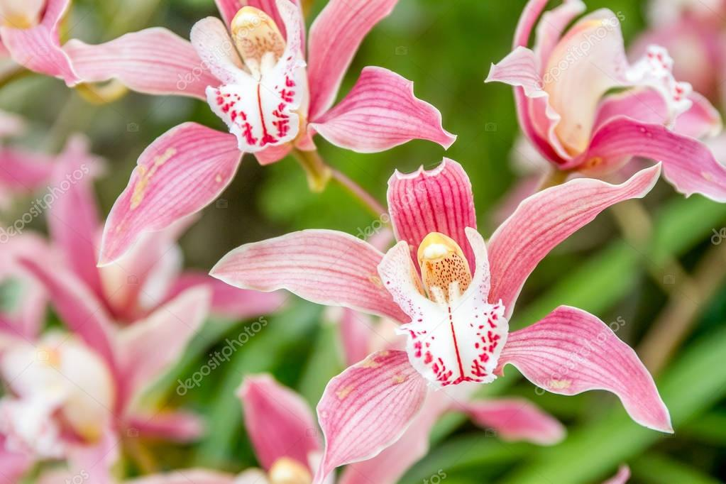 Beautiful orchid flowers