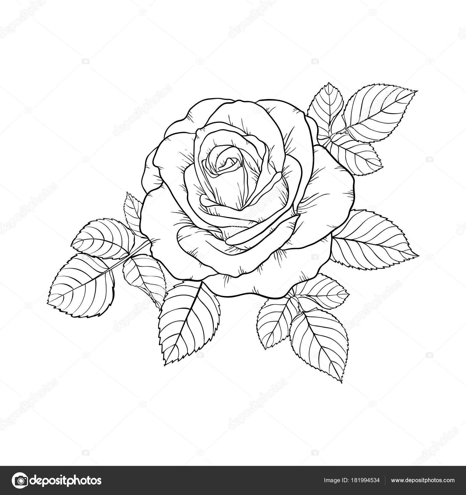 hermoso blanco y negro color de rosa y hojas. Arreglo floral aislado ...
