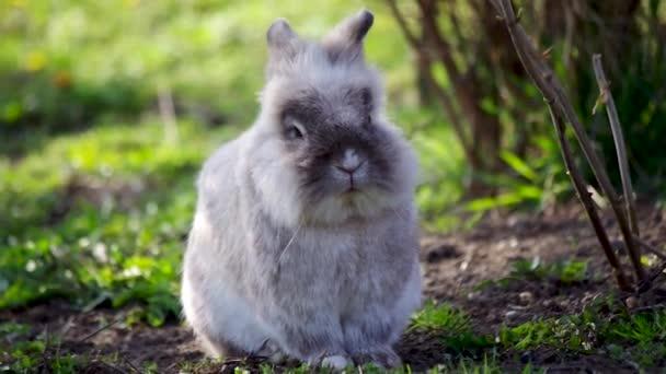 graue flauschige Kaninchen sitzen im Gras Sommertag