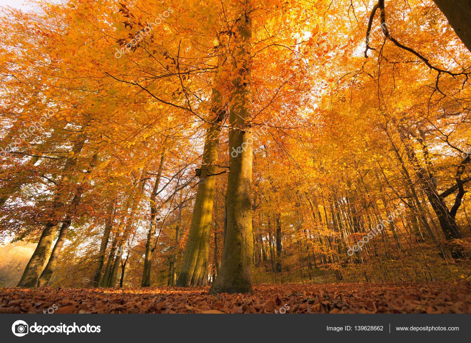 Paisajes otoales de bosque Fotos de Stock Voyagerix 139628662