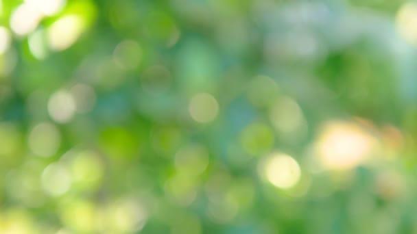 A szél által fújt homályos levelek bokeh-ja