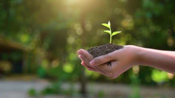 Lidé sázejí stromy do svých rukou. Existují stromy, nápady na ochranu přírody a životního prostředí.